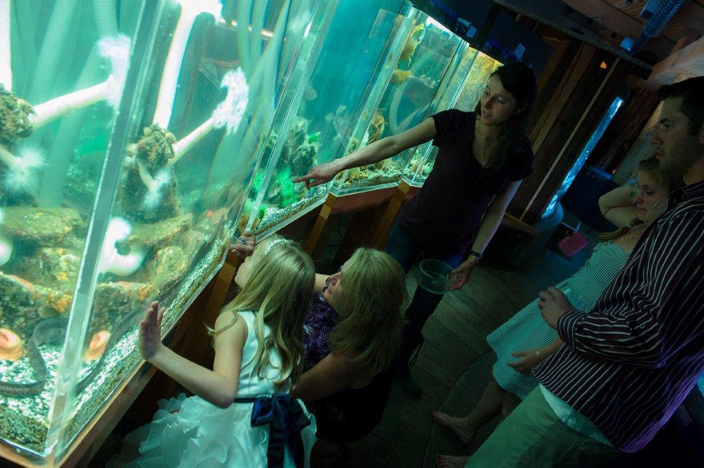Chris Boar_Ucluelet Aquarium Wedding